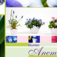 Floristik bei Blumen Anemone