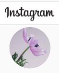 blumen anemone auf instagram